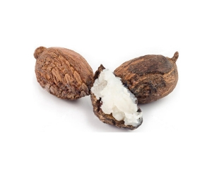 shea-nuts-carrier-oil2